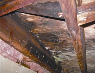 mold and rot in a Keene crawl space