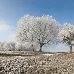Frost covering trees and a grassy field in Swanton