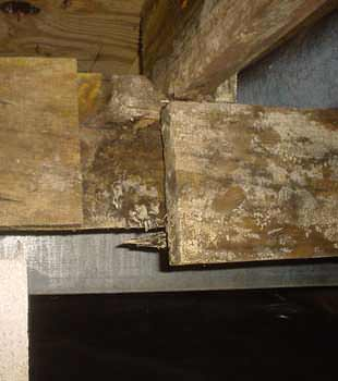 Extensive basement rot found in Colchester by Northern Basement Systems