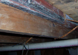 Rotting, decaying wood from mold damage in Williston